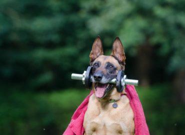 Ćwicz w domu!